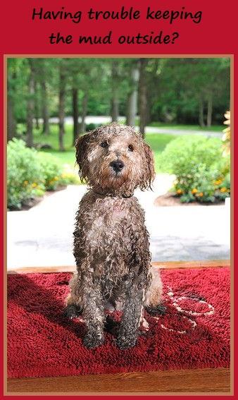 muddy pet